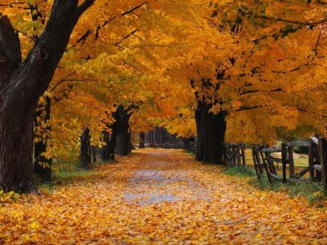 imagenes-paisajes de otoño-d7