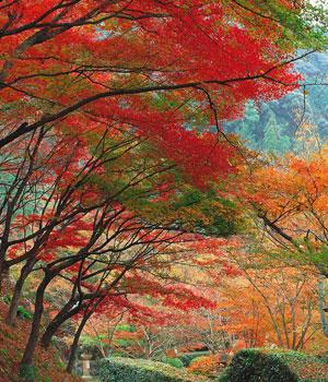 paisajes de otoño-d5