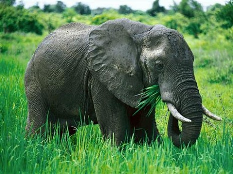 zaaaaaelefantes-en-extincion