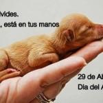 32 imágenes Feliz Día del Animal: Descargar tarjetas a WhatsApp