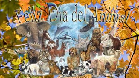 animal-argentina