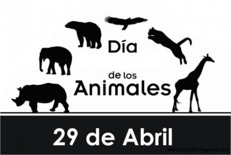 animaltarjeta0041