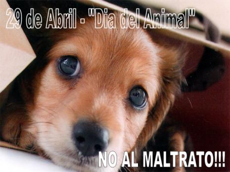 animalzzzzzzzwwwwwdia-del-animalNO_AL_MALTRATO