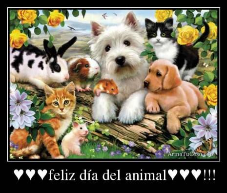 armatucoso-feliz-dia-del-animal-11922