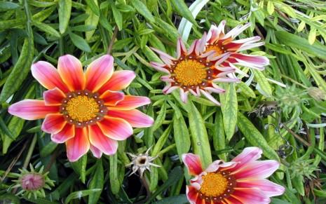 flores-en-el-campo-fondos