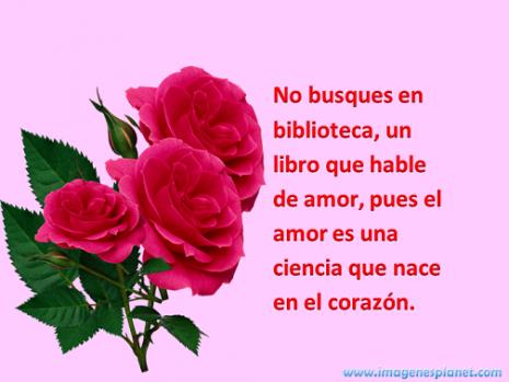 Imagenes De Perfil Para Whatsapp Bonitas Flores