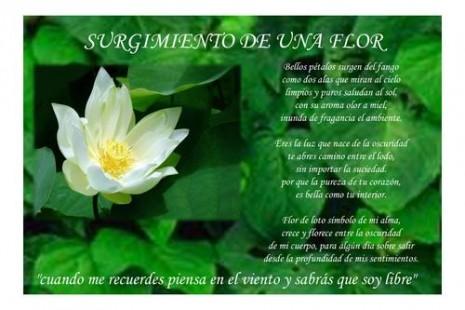 rosas1209504278_f