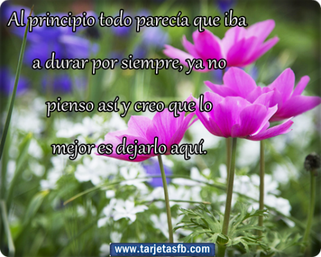 rosasTarjetas+ de+ flores+ con+ frases+ para+ etiquetar+ en+ tu+ muro