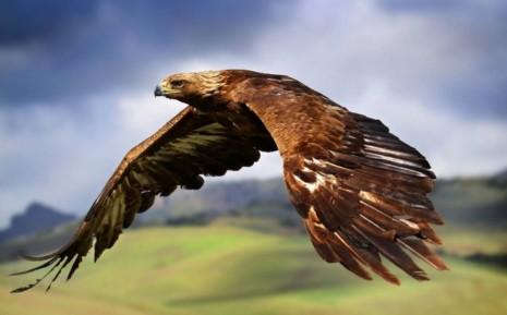 avesguila-volando-6