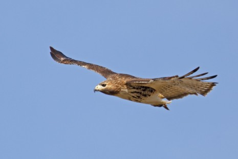 aveshalcon-volando