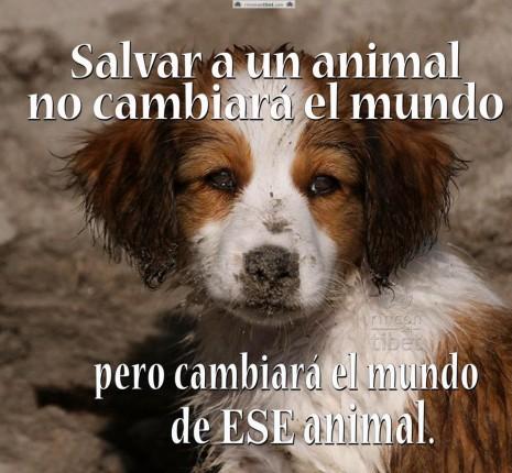 50 Imágenes Para Whatsapp De Animales En El Día Del Animal