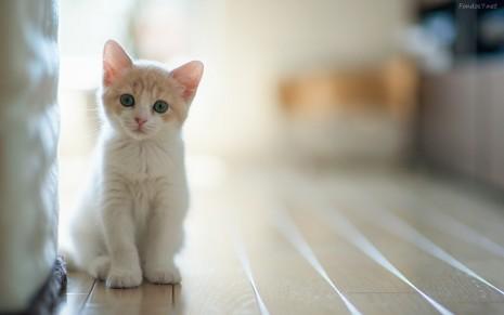 gato-bebe-hermoso-10370