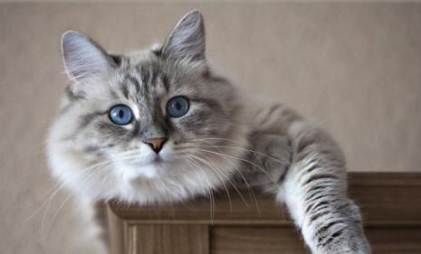 gatos30-cosas-de-los-gatos-que-no-sabias-1