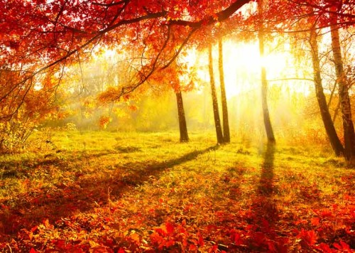 otoñoshutterstock_116597029