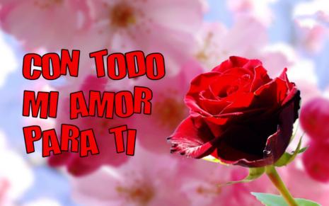 whatstodo-mi-amor