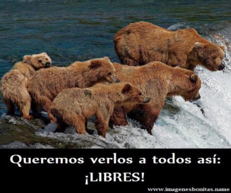 Derechos De Los Animales 46 Imágenes Y Mensajes Imágenes