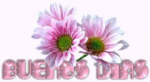 flores000_64897_357716730926732_677219941_n