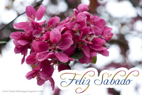 flores1-imagenes-con-mensajes-de-feliz-sabado-y-flores-fucsia