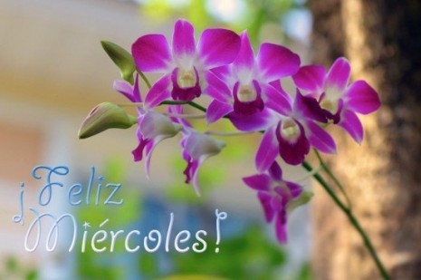 flores550x366xrosasflores-de-mi-jardin-orquideas-feliz-miercoles.jpg.pagespeed.ic.WuKc1FeRvV