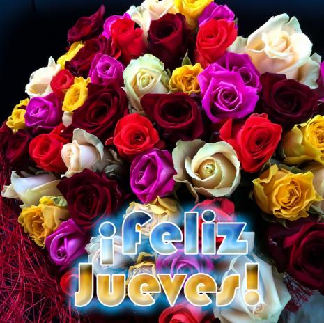 floreseliz-jueves-rosas-de-colores-mensajes-dias-de-la-semana