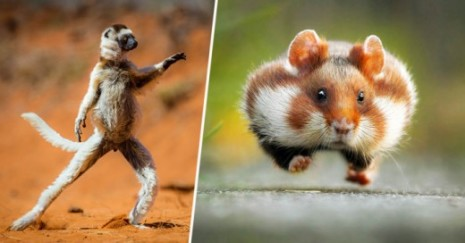 Cover-These-Are-The-most-Hilarious-animal-Photos-520x272
