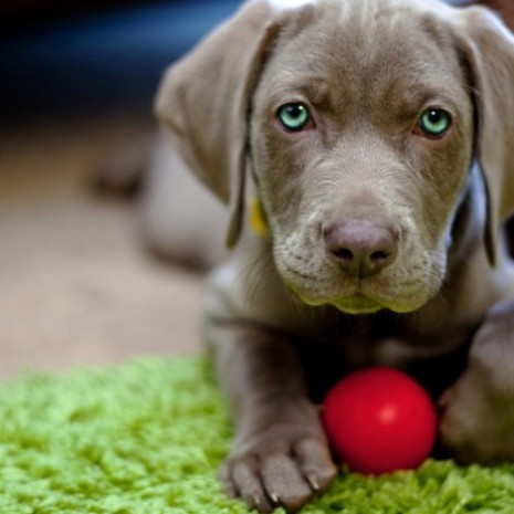 cachorrofoto-grupos-cachorros-480x480