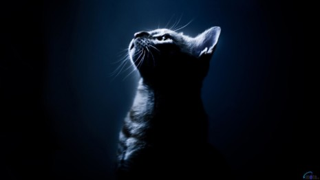 dark-cat-alone-1920x1080-wallpaper286875