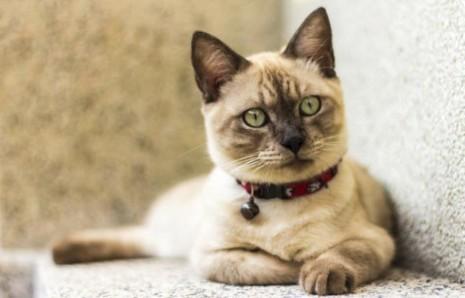 gatoConocimiento-gatuno-30-curiosidades-sobre-los-gatos-13