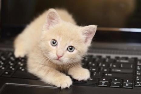 gatoConocimiento-gatuno-30-curiosidades-sobre-los-gatos