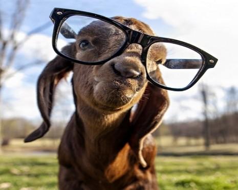 imagenes-animales-graciosos