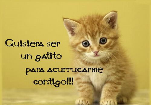 imagenes-de-gatitos-tiernos-con-frases-de-amor2