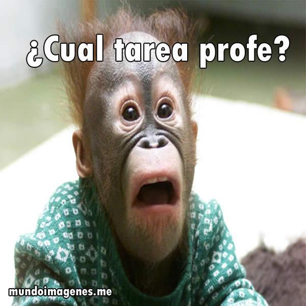 imagenes-graciosas-de-animales-en-facebook