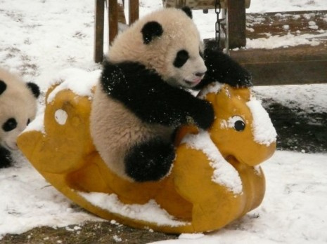pandafotos-guarderia-pandas