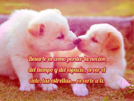 perritos-tiernos-con-frases-de-amor-narices-dandose-un-beso