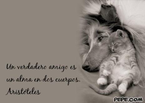 amigoun_verdadero_amigo_es_un_alma_en_dos_cuerpos_aristoteles_un_verdadero_amigo_es_un_alma_en_dos_cuerpos_aristoteles_0