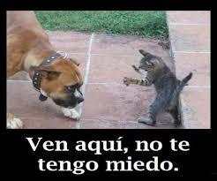 anigraciosas.htm24
