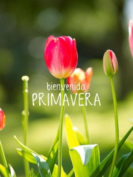 primaverabienvenida.jpg11