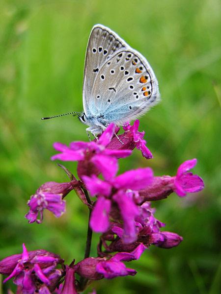 primaveramariposa10