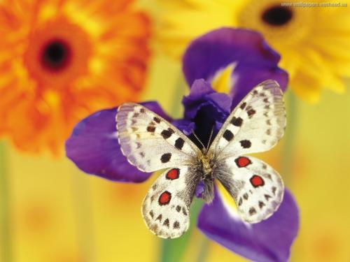 primaveramariposa2