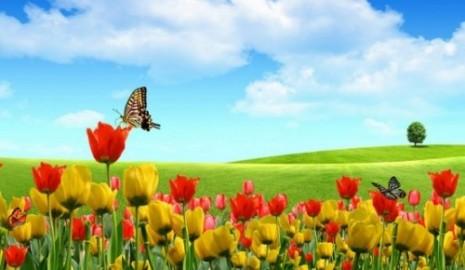 primaveramariposa7