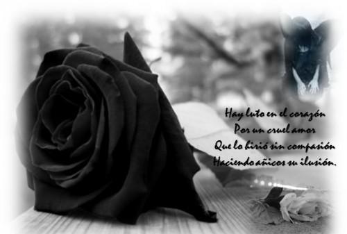 Rosas Negras Monos Y Lazos Con Mensajes Y Frases De Condolencias