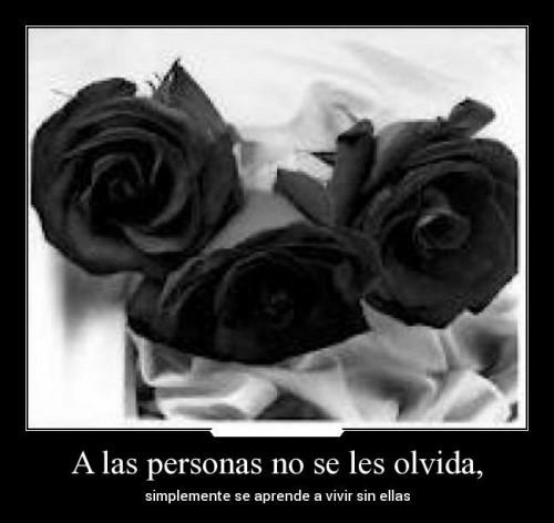 Rosas Negras Moños Y Lazos Con Mensajes Y Frases De Condolencias