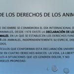 Derechos de los animales [46 Imágenes y mensajes]