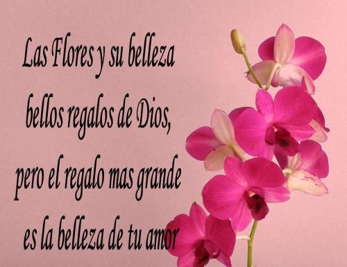 Imagenes Bonitas De Flores Con Frases: Imágenes De Flores Con Frases Románticas