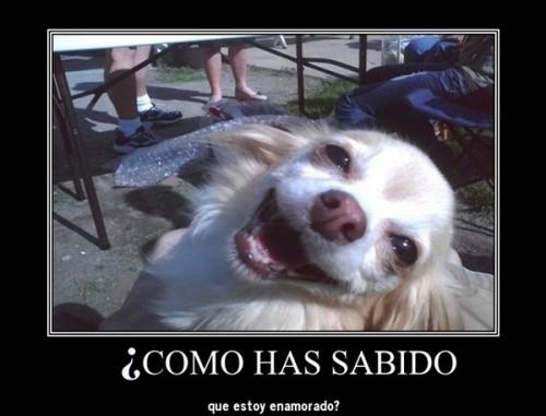 Imágenes De Perros Con Frases Divertidas Y Graciosas