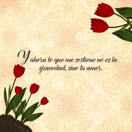 Imágenes De Flores Con Frases Románticas Imágenes Para