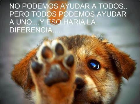 Dia Del Animal 29 De Abril Frases Imágenes Carteleras