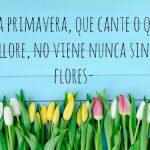Imágenes para WhatsApp de Flores y mensajes de Primavera